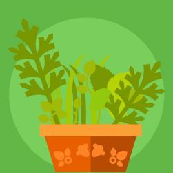 plantas medicinais brasileiras