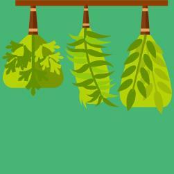 pesquisa sobre plantas
